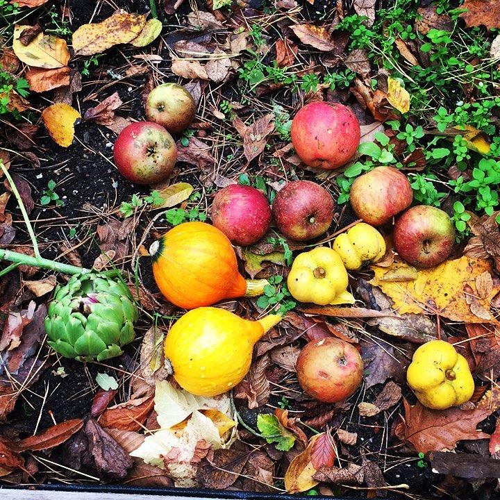 Autumn stilllife nature gardening colors